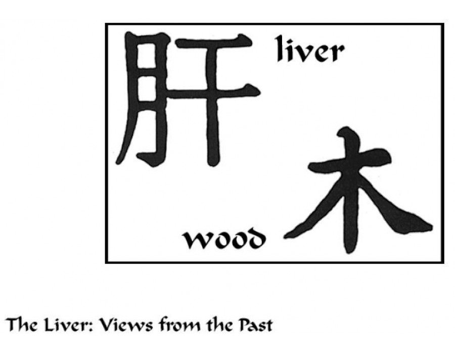 The Liver in TCM